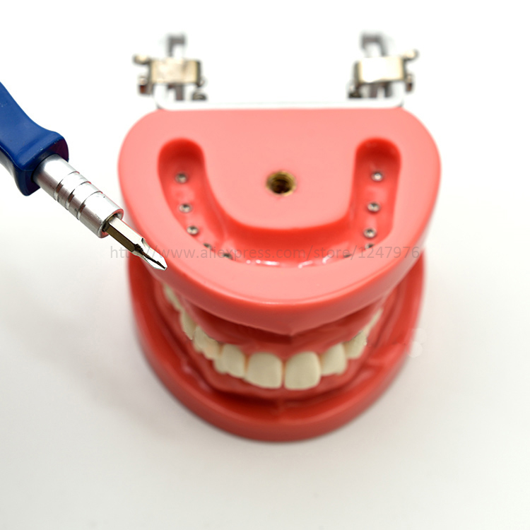 Стоматологическая Съемная Стоматологическая Модель Стоматологическая зубная композиция практическая модель с винтовой обучающей модели... - 3