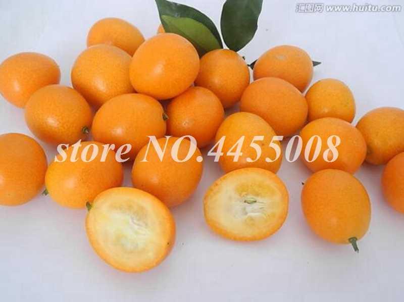 30 Pcs Hot Sale Kumquat Bonsai Orange Balkon Teras Pot Banyak Pohon Buah Lezat Juicy Orange Tanaman untuk RUMAH & taman Penanaman