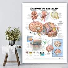 Human Anatomy of the Brain System Poster Anatomical Chart Human Body Medical Art Wall Poster Silk Print for Education home Decor