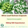 Cápsulas de Extracto de Hoja de olivo, 20% Oleuropeína, antioxidante, mejorar El sistema Inmunológico 500 mg * 200 Cápsulas