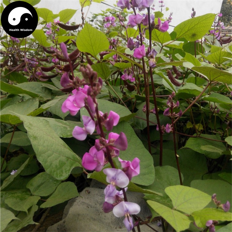 Buy Purple Moon Beans Vegetable Semente 50pcs Plant Lentils Bean Lablab Purpureus