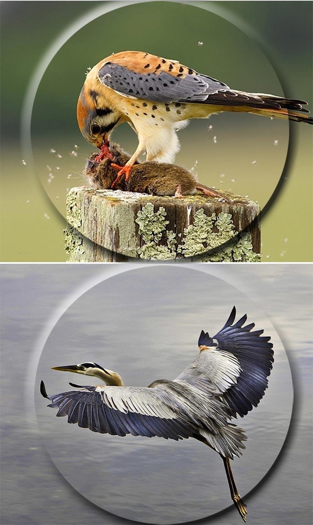 JouFou 20-60X80 HD Spotting Scope Waterproof Zoom Target Shooting Optical Glass High Power with Tripod Birdwatching (9)