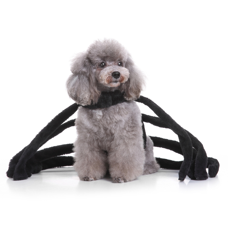 Heve You Clothes Sets for Small Dogs Cats Pet Clothes Large Black Spider Dog Costume Novelty Funny Party Festival Pet Clothing-in Dog Sets from Home ...  sc 1 st  AliExpress.com & Heve You Clothes Sets for Small Dogs Cats Pet Clothes Large Black ...