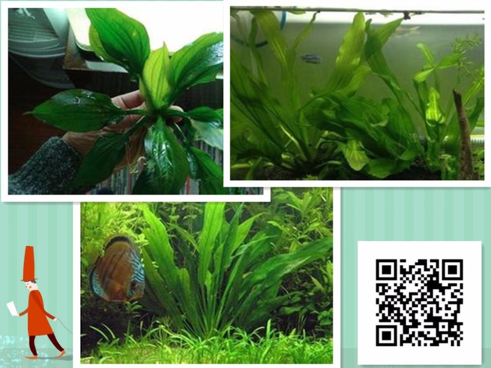 Aquarium plantes sol achetez des lots petit prix for Aquarium petit prix