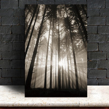 Sun and Forest Wall Art