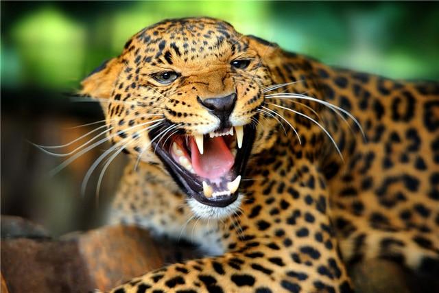 Benutzerdefinierte Leinwand Kunst Großen Atemberaubenden Leopard ...