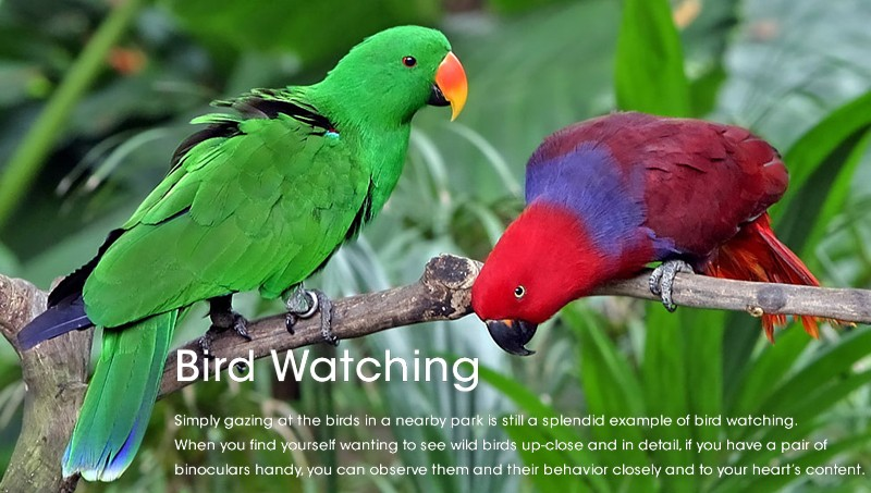 bird-watching-tour