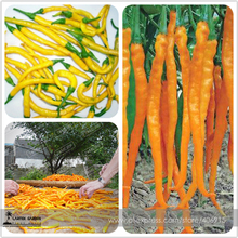 Hybrid Yellow & Orange Long Chili Pepper Seeds 200+ Very Hot