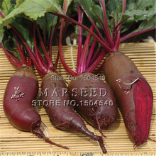 Purple Beets – 100 seeds/pack Cylindra Beet – very easy growing