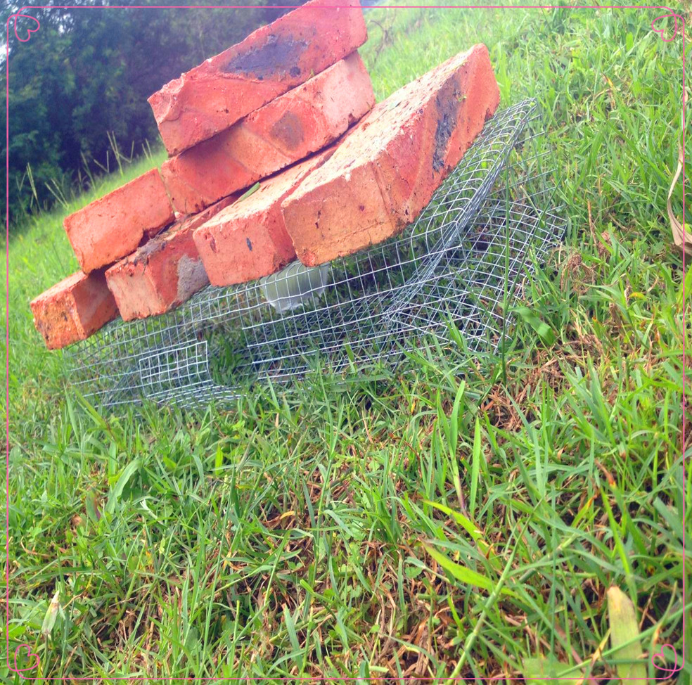 High Quality Live Catch  Snake Trap/Drum Belly Giant Viper Trap /with Low Price From Ancient China