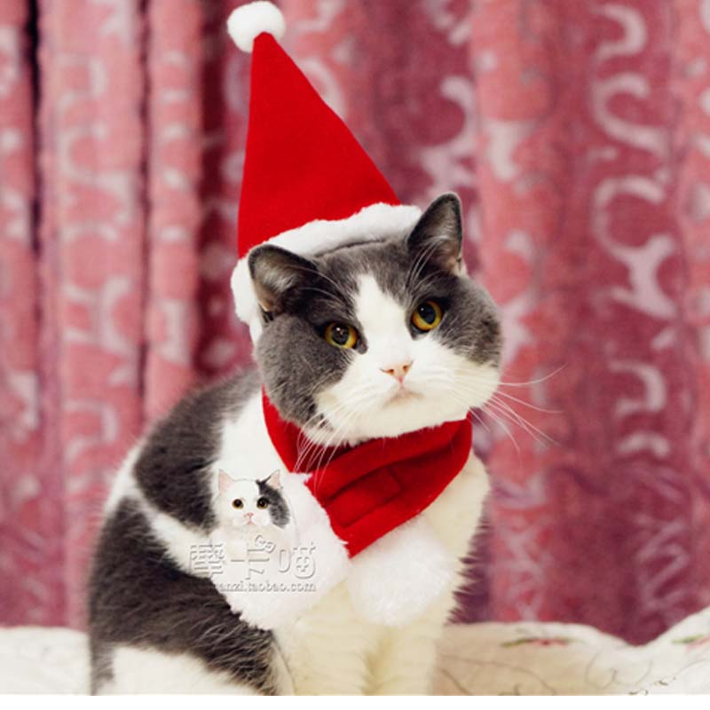 Pet Cat Dog Christmas costume Hats cape scarf suit Warm winter hat for Dog Pet Santa Cla ...