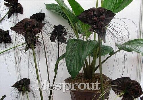 горшки для орхидей купить в Китае
