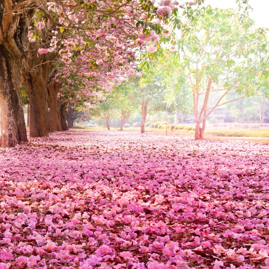 Laeacco Pink Flowers Tree Petals Scenery Portrait Baby
