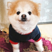 Pet Autumn Winter Warm Costume, Raglan Sleeve Fleece Sweater For Small Medium Dogs