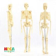 Медицинский стандарт для изобразительного искусства и медицины 45 см скелет модель человека. Модель скелета MGG101