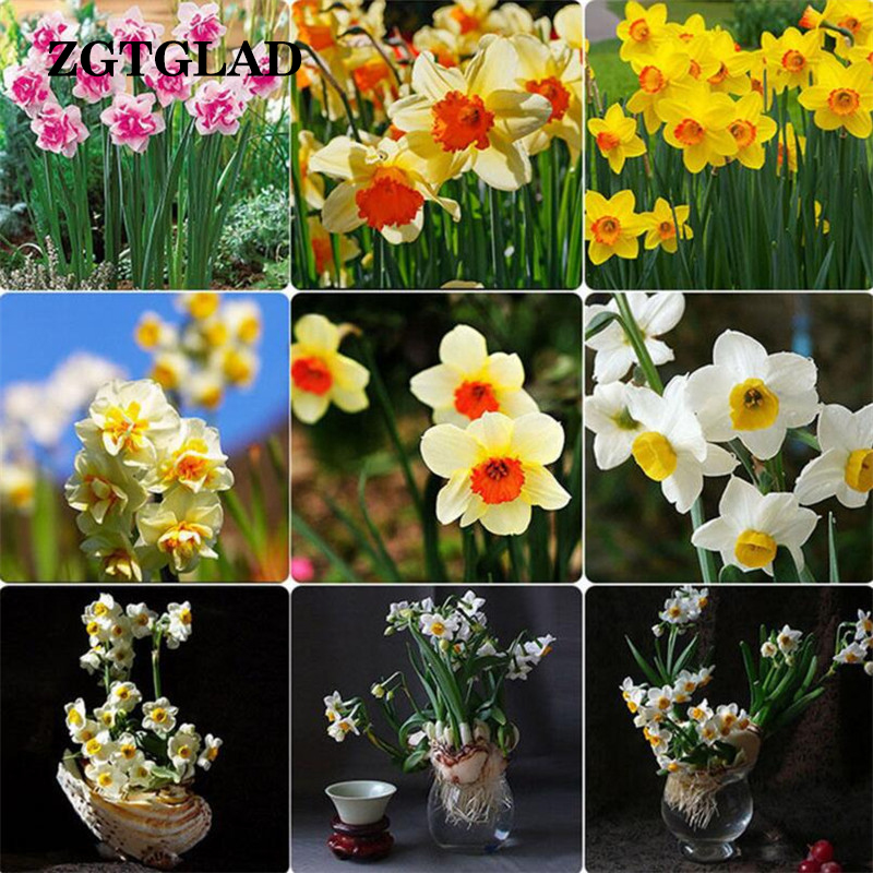 popular color daffodil-buy cheap color daffodil lots from china