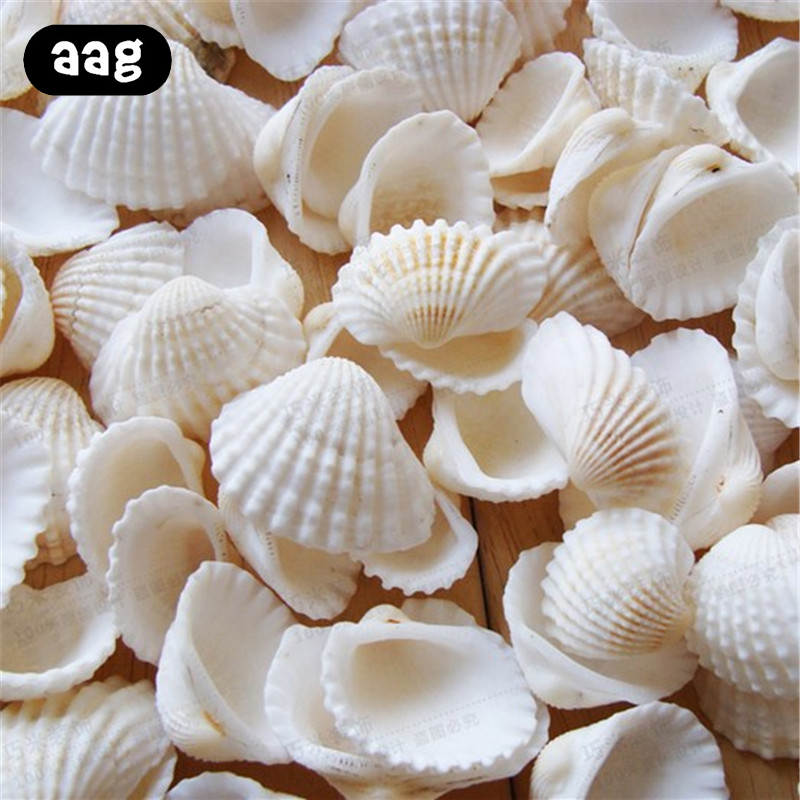 10pcs/Lot Aquarium Seashells Craft Decor Natural DIY Shell Conch Starfish Landscape Tank Decorative Ornaments 2-3.5cm