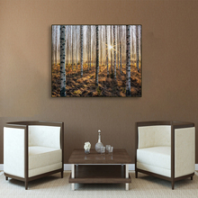 Laeacco Canvas Calligraphy Painting Autumn Sunshine Birch Forest Poster Print Wall Art Pictures for Living Room Home Decoration