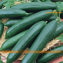 Japanese 'JingYan F1' Fruit Cucumber Seed, 20 Seeds/Pack, Early Spring Cucumis Sativus Organic Vegetable Seed-Land Miracle