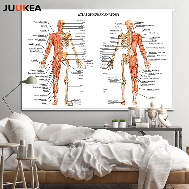 Beste Atlas Der Menschlichen Anatomie Galerie - Anatomie Von ...
