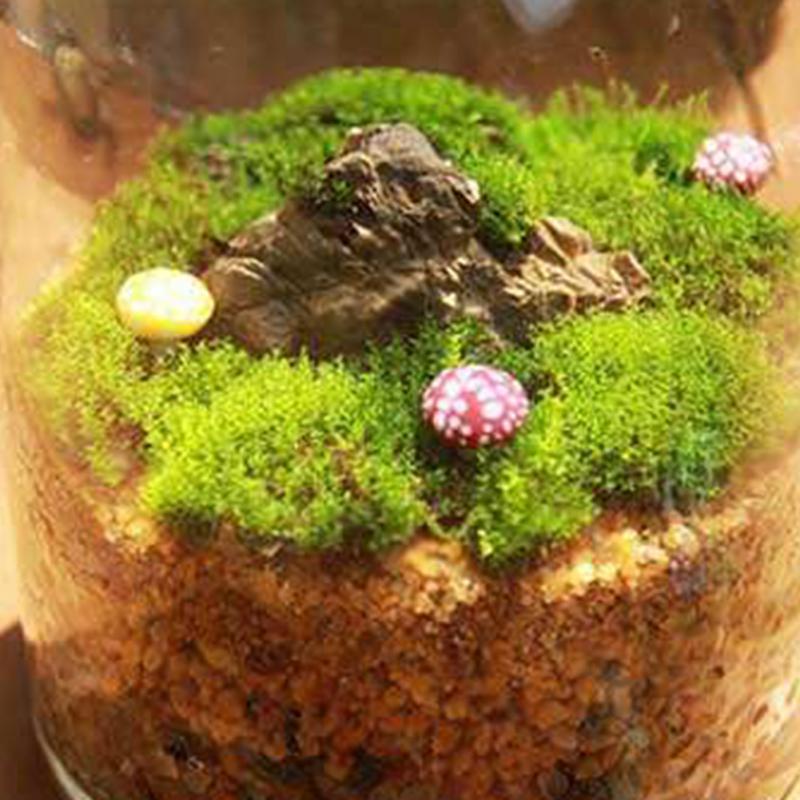 Novo 4 estilos musgo natural jardim decoração acessórios viver musgo viver almofada réptil terrário bonsai decoração natural floresta tapete