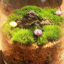 NEW 4 Styles Natural Moss Garden Decor Accessories Living Moss Live Cushion Reptile Terrarium Bonsai Decor Natural Forest Carpet(China)