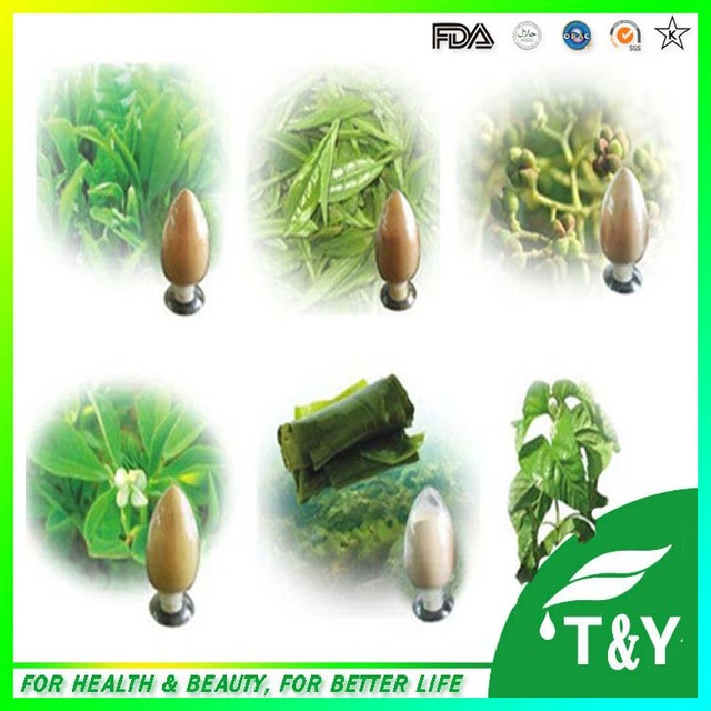 Venda quente extrato Da Planta Extrato De Sementes De Funcho Em Pó 100g