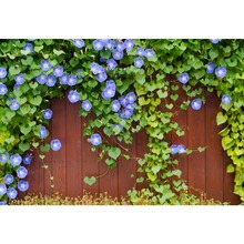 Laeacco Morning Glory Heart leaves Planks Wall Baby Natural Scene Photography Background Photographic Backdrops For Photo Studio стоимость