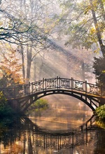 Laeacco Forest Bridge River Reflection Autumn Sunlight Photography Background Customized Photographic Backdrops For Photo Studio