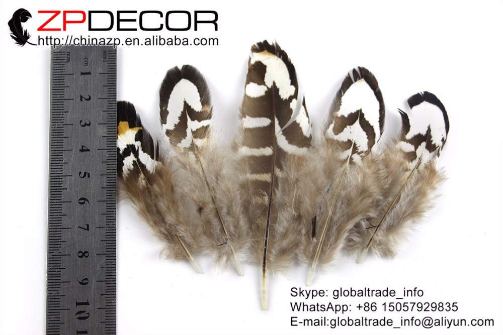 Tiny Black and White Reeves Venery Pheasant Plumage feathers (3)