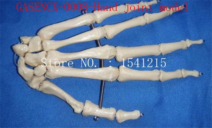 Human hand joint model skeleton Skeleton model Teaching medicine Body specimen model-GASENCX-0008