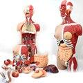 85 СМ Людская Анатомическая Модель Манекен модель тела Внутренних органов анатомия рассечение манекены Художника