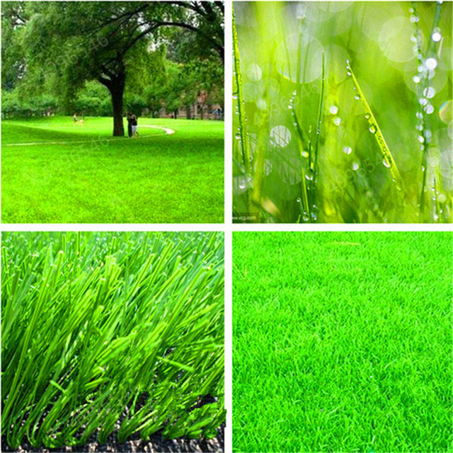 500 Pcs Aquarium Grass Plants Water Aquatic Plant bonsai Live Moss Grass Easy to Grow Fish Tank Landscape Decoration Ornaments