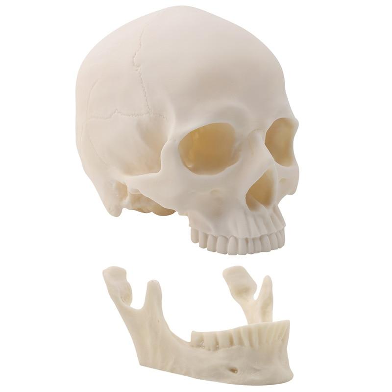 Resin Art Human Skull Replica Teaching Model Medical Realistic 1:1 Adult Size