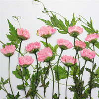 Hot Selling Products 2015 Dried Press Flower Pink Chrysanthemum With Stem Decoration Wholesale Free Shipment 1
