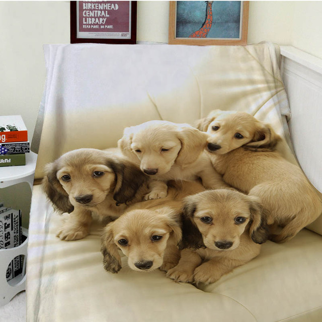 Blankets Cobertor Warmth Soft Plush Five Cute Puppies Looking At The Camera Brother Dog Sofa Bed