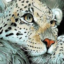 Grosir Snow Leopard Pictures Gallery Buy Low Price Snow Leopard
