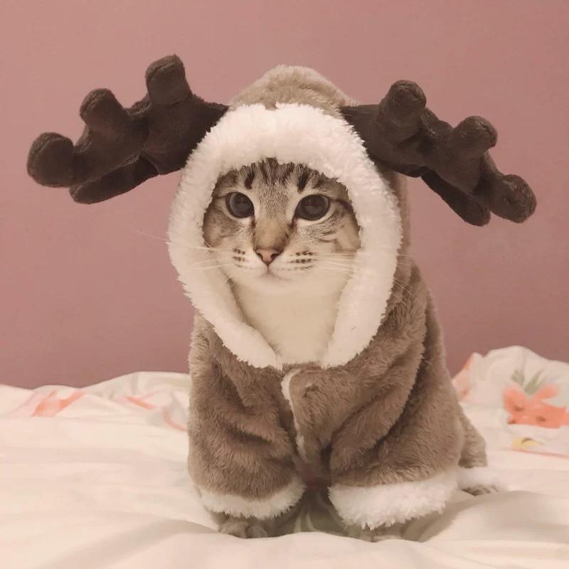 Warm Cat Dear Coat