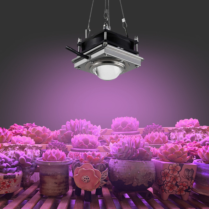COB LED Grow Light 150W Phyto Lamp For Plants Fitolampy Indoor Lamp Full Spectrum Grow Tent Box Garden Light For Plants Flowers
