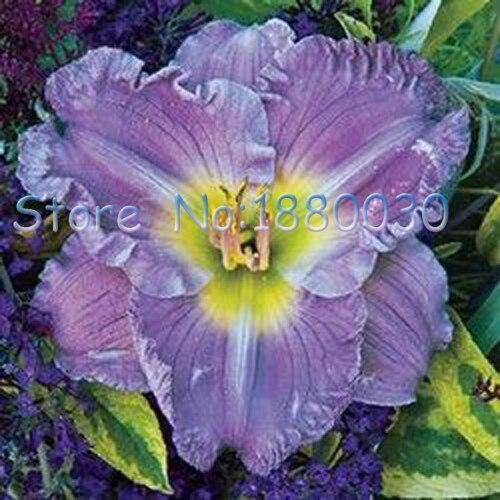 Achetez en Gros hibiscus fleur plante en Ligne à des Grossistes ...