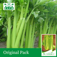 1 original pack 40 pcs / bag dry celery Seeds, Delicious vegetable seeds