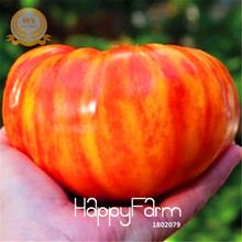 New Seeds 2017!Fruits vegetables seeds 50pcs Heirloom Big Rainbow Stripey Beefsteak Tomato Seeds Bonsai tomato,#NPY91G