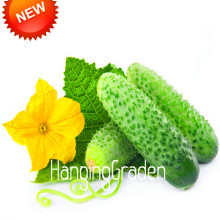 New Fresh Seeds Rare Cucumber Seeds Green Organic Vegetables and Fruit Seeds Delicious 50 Particles / lot,#0W7K2Z