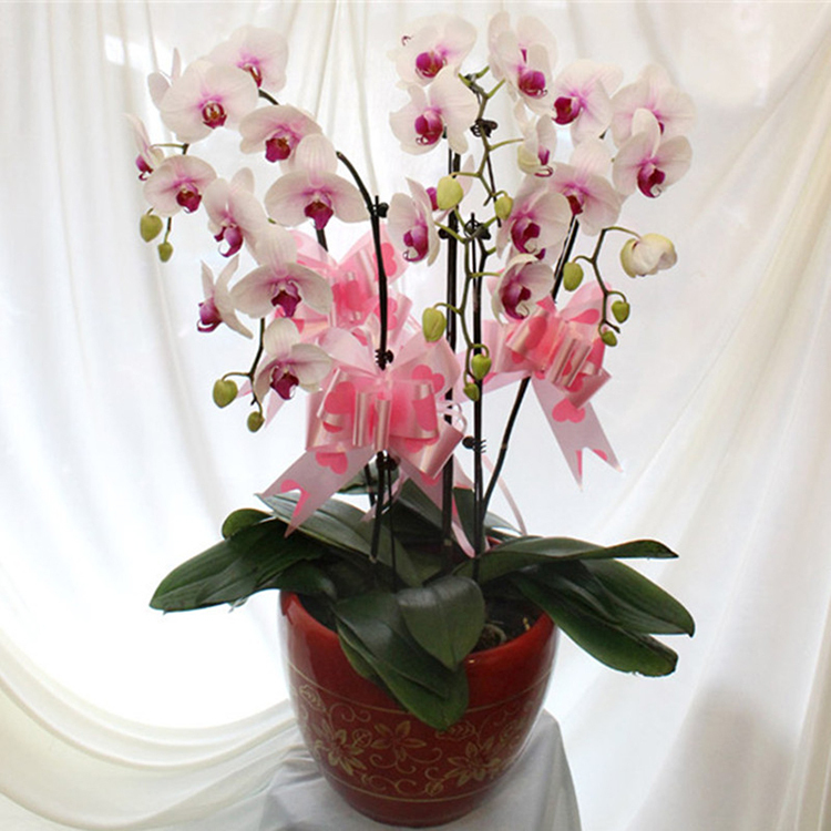 Flores De Interior Lqqgxl Estilo Europeo Sala De Estar Macetas De - Flores-interior