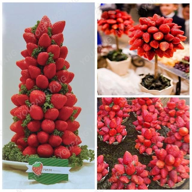 200 piezas de bonsái de fresa azul raro al aire libre árbol de fresa multicolor plantas de fruta orgánica bonsái plantación de jardín casero
