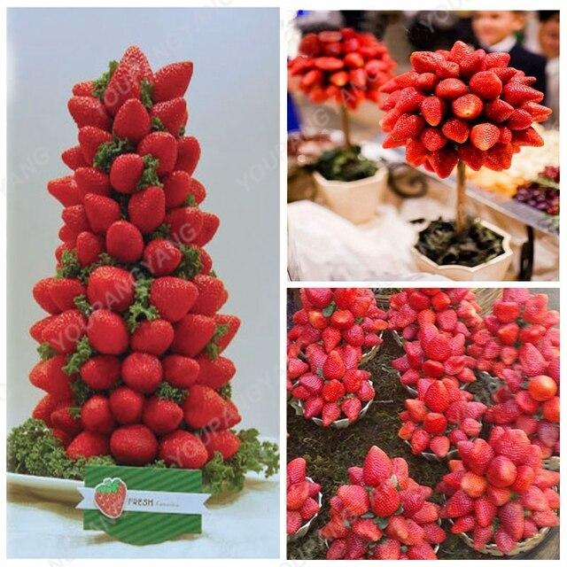 200 pz Rare Blu Fragola bonsai All'aperto Fragola Albero di Multi Colore di Frut