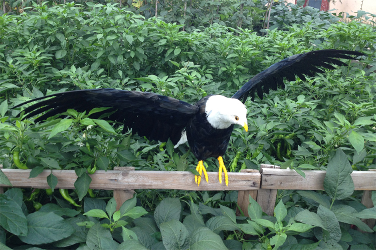 black simulation wings eagle model foam&furs big eagle gift about 90x46cm 1664 simulation black