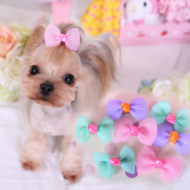 Online Shop Cute Candy Color Pet Hair Clips Brand Designs Pink ...