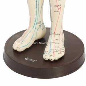 """Image 5 - """"Menselijk Lichaam Acupunctuur Model Mannelijke Meridianen Model Grafiek Boek Base 50Cm"""