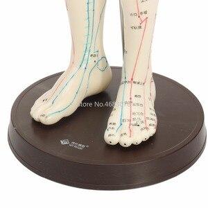 """Image 5 - """"Model akupunktury ludzkiego ciała Model meridianów męskich podstawa książki 50cm"""
